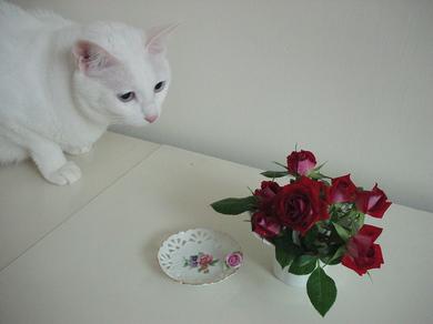 101008_vase_flower.jpg