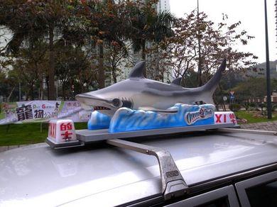 170211_shark2.jpg
