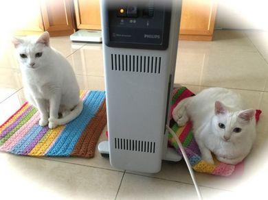260115_heater2nyan1.jpg