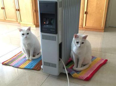 260115_heater2nyan2.jpg
