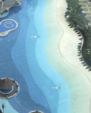 pool2_040416.jpg